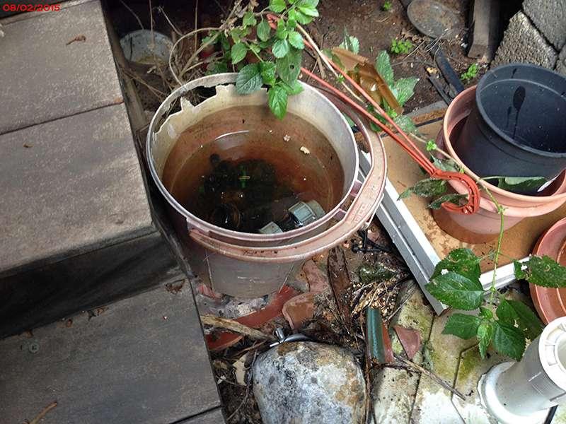 בית גידול לזחלי יתושים